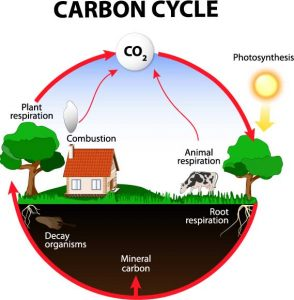 Organic farming encourages a healhy carbon cycle