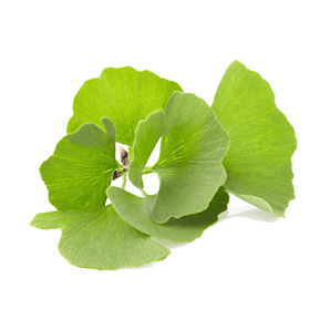 https://bravotea.com/shop/absolute-ginkgo-biloba/