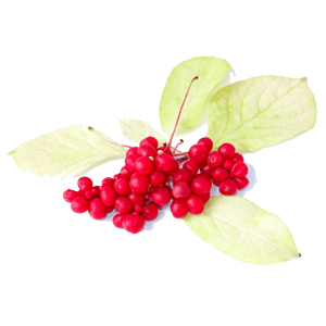 Absolute Schisandra Berry Tea by Bravo